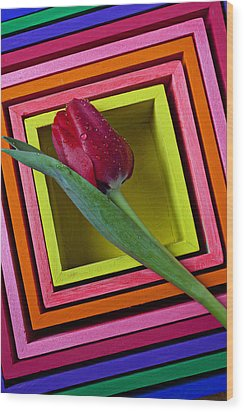 Red Tulip In Box Wood Print by Garry Gay