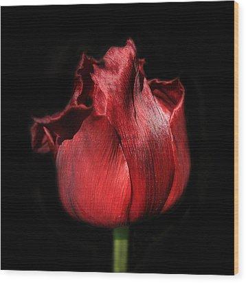 Red Tulip Wood Print by Martin Crush