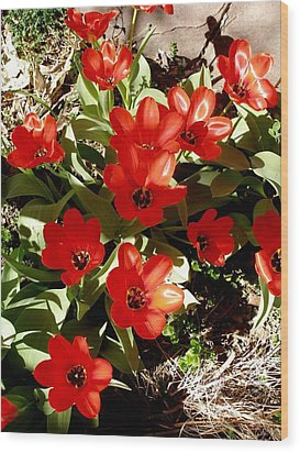 Wood Print featuring the photograph Red Tulips by David Pantuso
