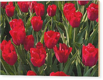 Red Tulips Wood Print by Hans Engbers