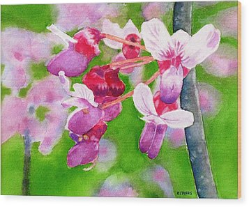 Redbud Wood Print by Debra Spinks
