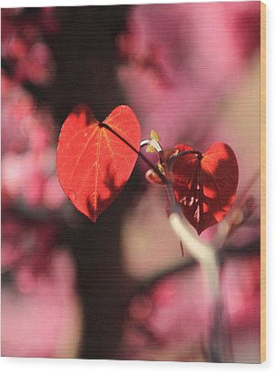 Wood Print featuring the photograph Redbud In Spring by Scott Rackers