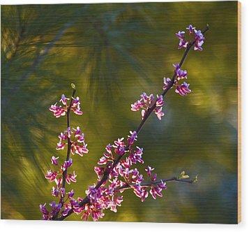 Redbud Wood Print by Rob Travis