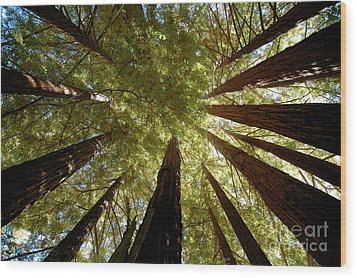 Wood Print featuring the photograph Redwood Canopy by Johanne Peale