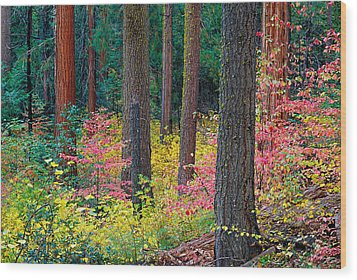 Redwoods And Dogwoods Wood Print by Tim Fleming