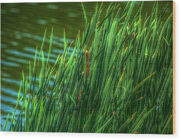 Reed Amoung Grass Wood Print by Ronald T Williams