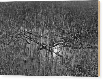 Reeds And Tree Branches Wood Print by David Pyatt