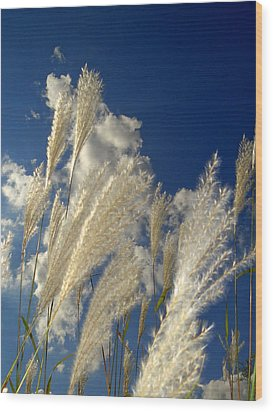 Reeds On A Sunny Day Wood Print by Bruce Ritchie