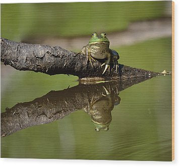 Reflecktafrog Wood Print by Susan Capuano