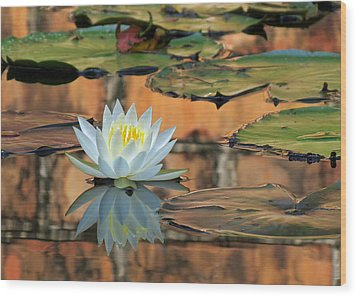 Wood Print featuring the photograph Reflecting Pond by Deborah Smith