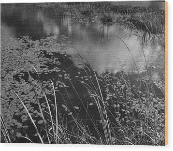 Wood Print featuring the photograph Reflections In The Pond by Kathleen Grace