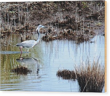 Reflections Of A Blue Heron Wood Print