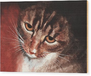 Reflective Kitty Wood Print by Tricia Griffith