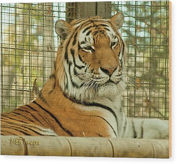 Regal Pose Wood Print