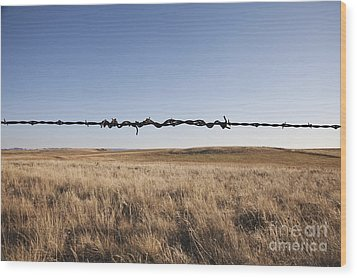 Repaired Strand Of Barbed Wire Wood Print by Jetta Productions, Inc