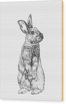 Rescued Rabbit Wood Print