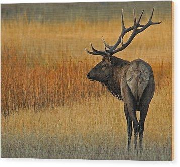 Respite Wood Print by Sandy Sisti