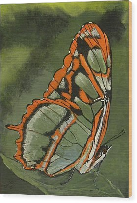 Resting Butterfly Wood Print