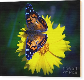 Resting Butterfly Wood Print by Kevin Fortier