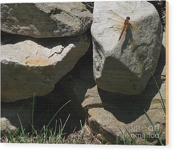 Wood Print featuring the photograph Resting Dragonfly  by Nancy Patterson
