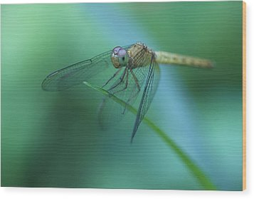 Resting Dragonfly Wood Print