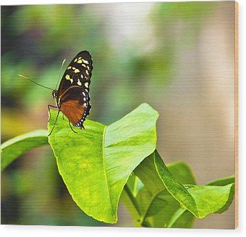 Resting On A Petal Wood Print