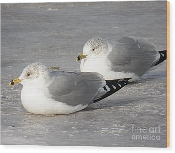 Resting On The Ice Wood Print by Judy Via-Wolff