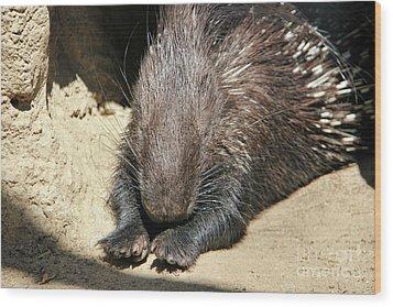 Resting Porcupine Wood Print by Mariola Bitner