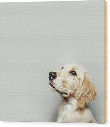 Retriever Pup Wood Print by J W L Photography
