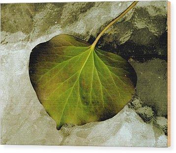 Reverse Ivy Wood Print by Beth Akerman