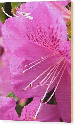 Rhododendron Flower Wood Print by Manuela Constantin