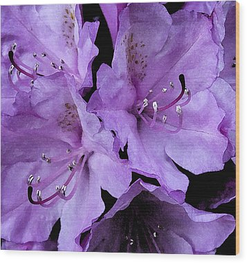 Wood Print featuring the photograph Rhododendron II by Michael Friedman