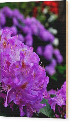 Wood Print featuring the photograph Rhododendron  by Puzzles Shum