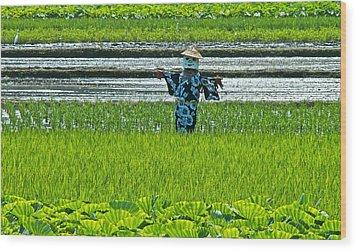 Rice Field - Okinawa Wood Print