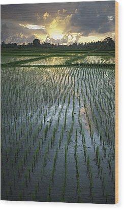 Rice Fields, Near Ubud Bali, Indonesia Wood Print by Huy Lam