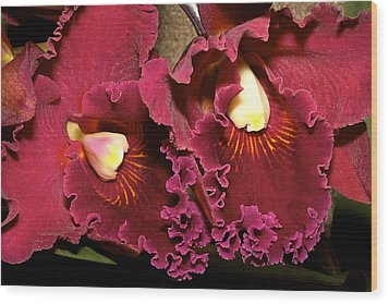 Rich Burgundy Orchids Wood Print by Phyllis Denton