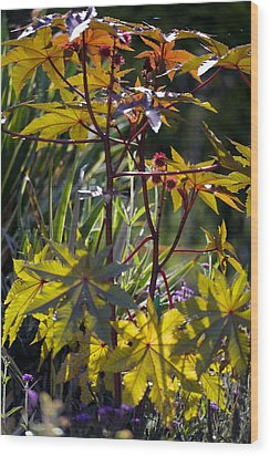 Ricinus Communis 'gibsonii' Wood Print by Dr Keith Wheeler