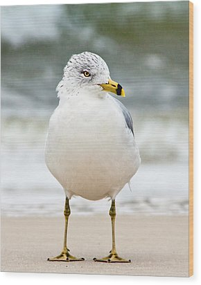 Wood Print featuring the photograph Ring-billed Gull by Susi Stroud