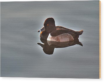 Wood Print featuring the photograph Ring-necked Duck by Tam Ryan