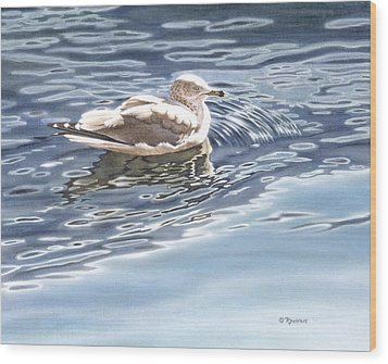 Ringed Bill Gull Wood Print by Richard De Wolfe