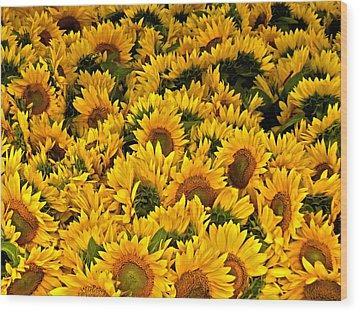 Wood Print featuring the photograph Riotous Sunflowers by Nancy De Flon