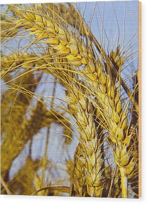 Ripe Barley Wood Print by Daniel Blatt