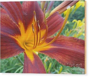 Ripe Blood Orange Wood Print by Trish Hale