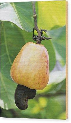 Ripe Cashew Nut Wood Print by David Nunuk