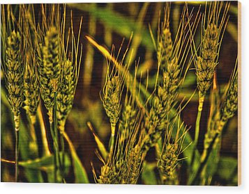Ripening Wheat Wood Print by David Patterson