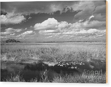 Wood Print featuring the photograph River Of Grass - The Everglades by Myrna Bradshaw
