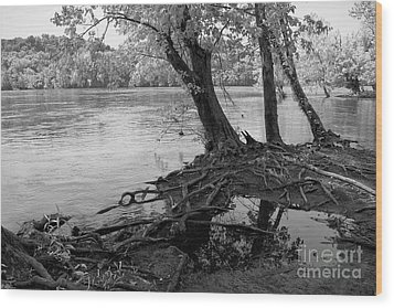 River-washed Roots Wood Print by Susan Isakson