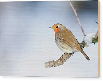 Robin (erithacus Rubecula) Wood Print by Andrew Howe