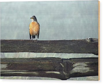 Wood Print featuring the photograph Robin In The Mist. by I'ina Van Lawick