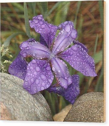 Rock Iris Wood Print by Coby Cooper